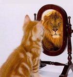 Leeuw kat