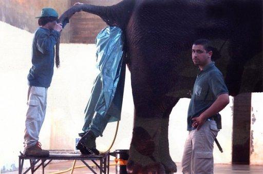 3-Elephant-Butt-Job